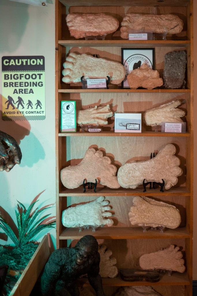 Casts of Bigfoot prints
