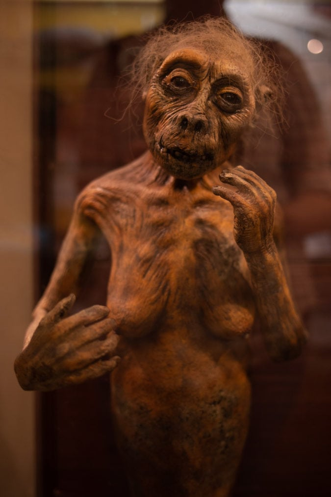 a figure at the cryptozoology museum