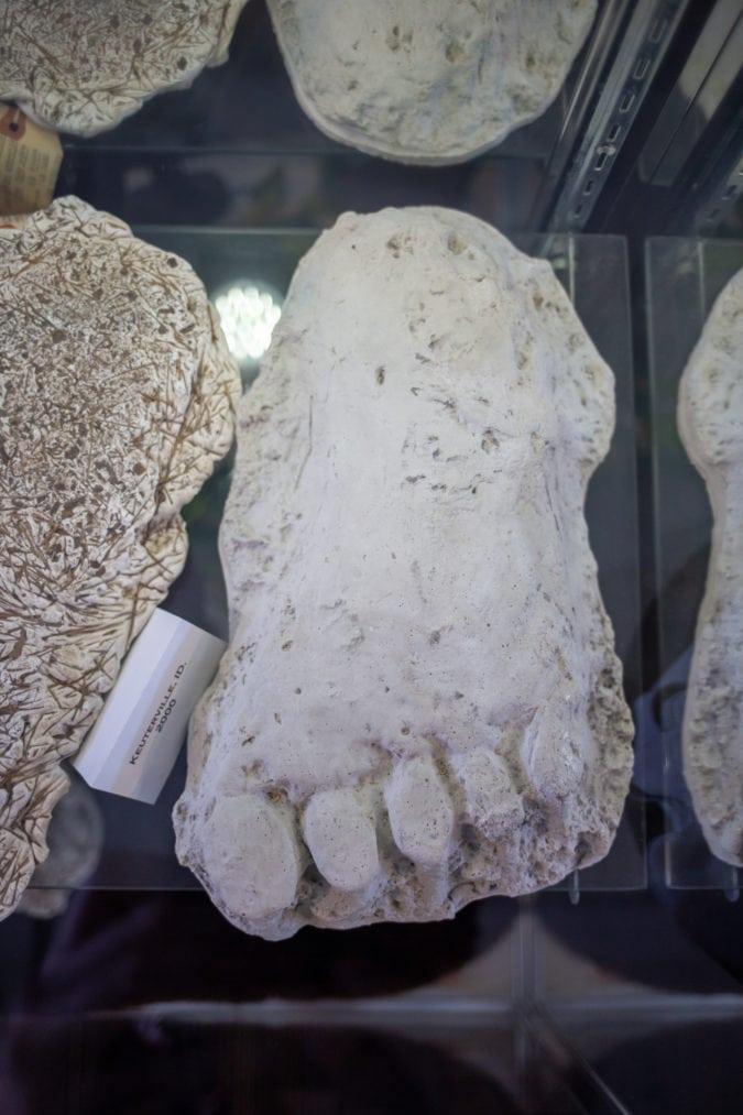 cast of bigfoot tracks