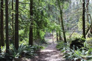 History Bigfoot Olympic-Peninsula-Hiking-for-Bigfoot