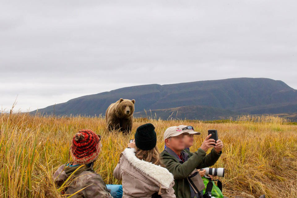 Cross species viewing with Grizzly Safaris. (Courtesy Photo / Grizzly Safaris)